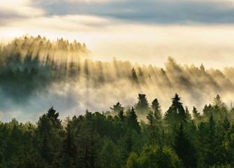 """Sächsische Schweiz: Zertifizierung als """"Nachhaltiges Reiseziel"""" hat begonnen"""