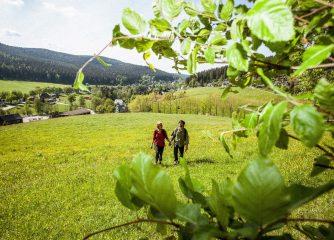 Nominierung des Kammwegs zu Deutschlands Schönstem Wanderweg 2021- Abstimmung endet bald!